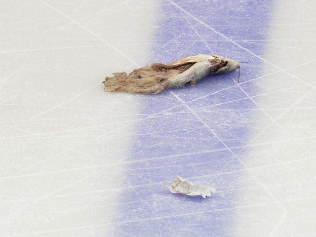 Un poisson-chat cause l'arrêt d'un match de … hockey sur glace !